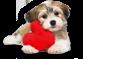 Hunde Symbol